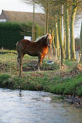 Brabander trekpaard <br /> © Dirk Caremans