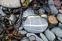 "A ""plaid"" beach stone lies with other striped and speckled rocks, tumbled with seaweed on the New Brunswick coast."