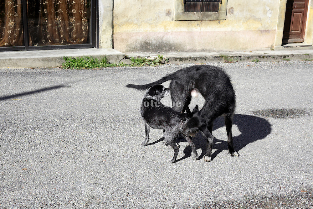 dogs sniffing each others behind