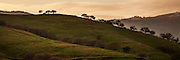 Oak trees line a ridge in spring on the green hills on the central California coast