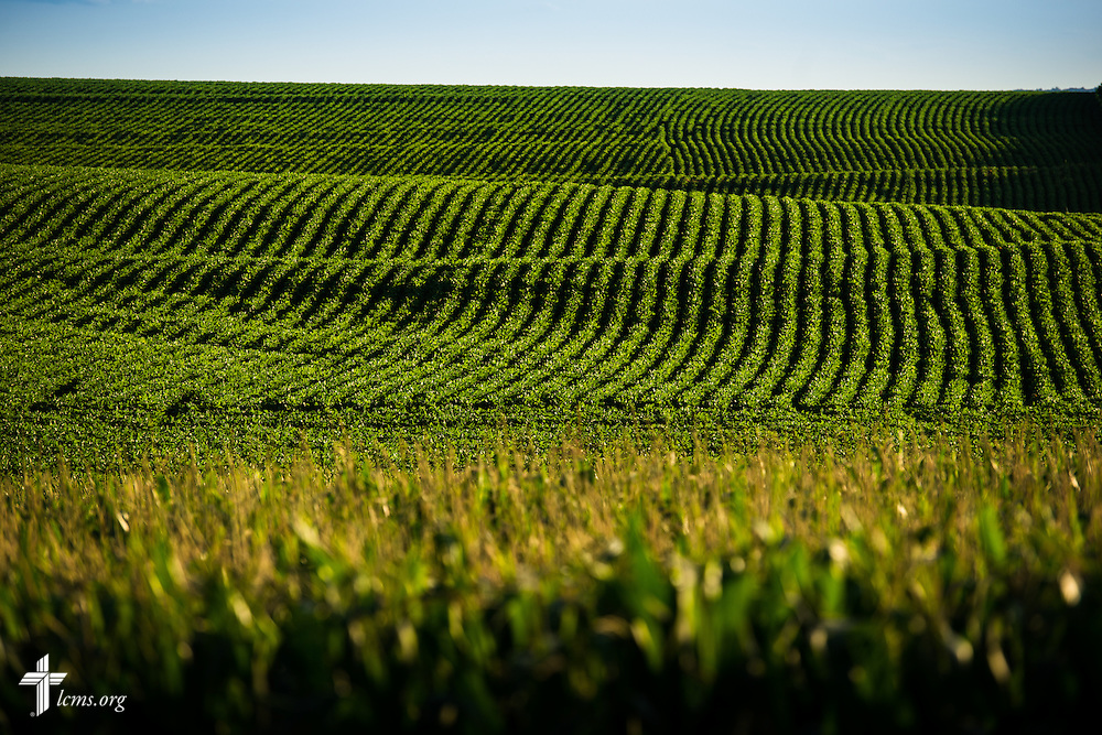 Rolling hills of corn groove the landscape on Saturday, July 18, 2015, near Mission Central in Mapleton, Iowa. LCMS Communications/Erik M. Lunsford