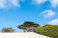 Carmel-by-the-Sea, Californie, USA.