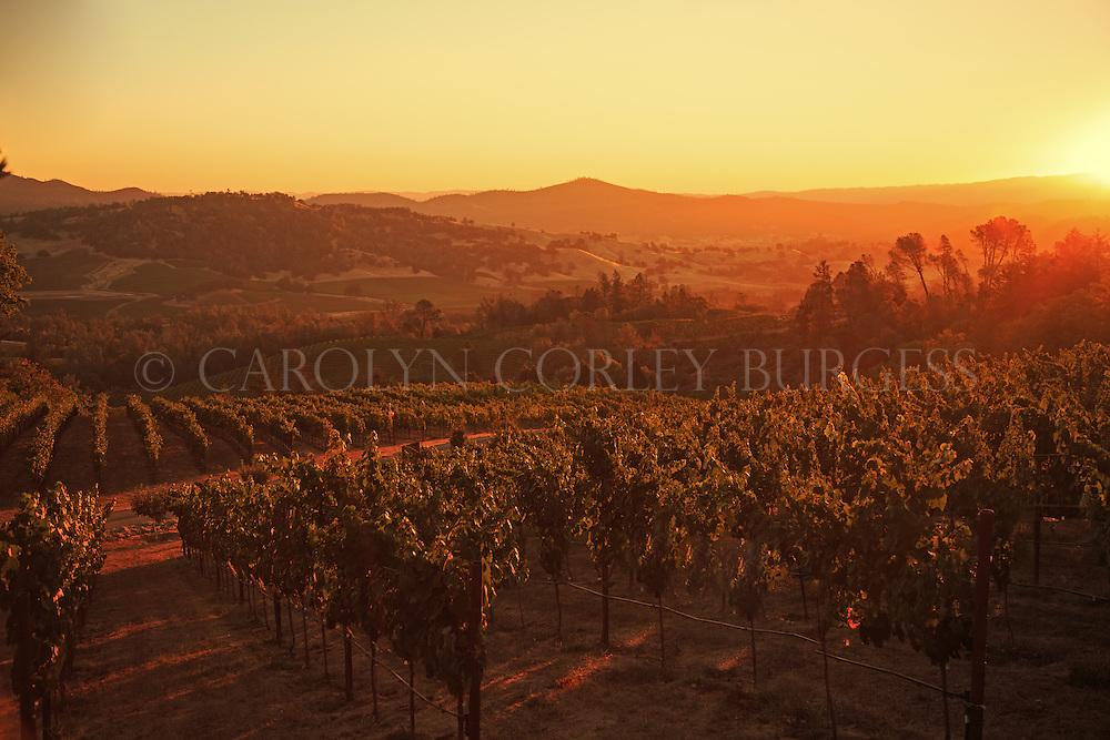 sunrise over Haymaker Vineyard on Howell Mountain vineyard in Napa Valley.