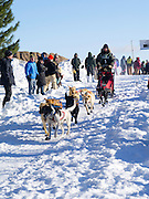 Matt Sturmer of Bruce Crossing, Michigan sets off on his ten-dog class sled race on Sunday, 2 Feb 2014. Scenes from the Apostle Islands Sled Dog Race, hosted by the Bayfield Chamber of Commerce, near Bayfield, WI