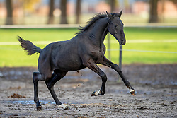 Van Mieghem Shani, BEL, Taragon<br /> Stal De Wolfshoeve - Huijbergen 2019<br /> © Hippo Foto - Dirk Caremans<br /> 13/11/2019