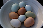 bowlful of mixed colored eggs from heritage free range chickens