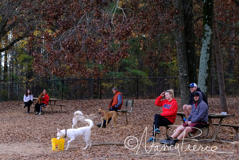 This is the dog park at Reedy Creek Park.