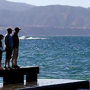 Island Bay Festival Swim