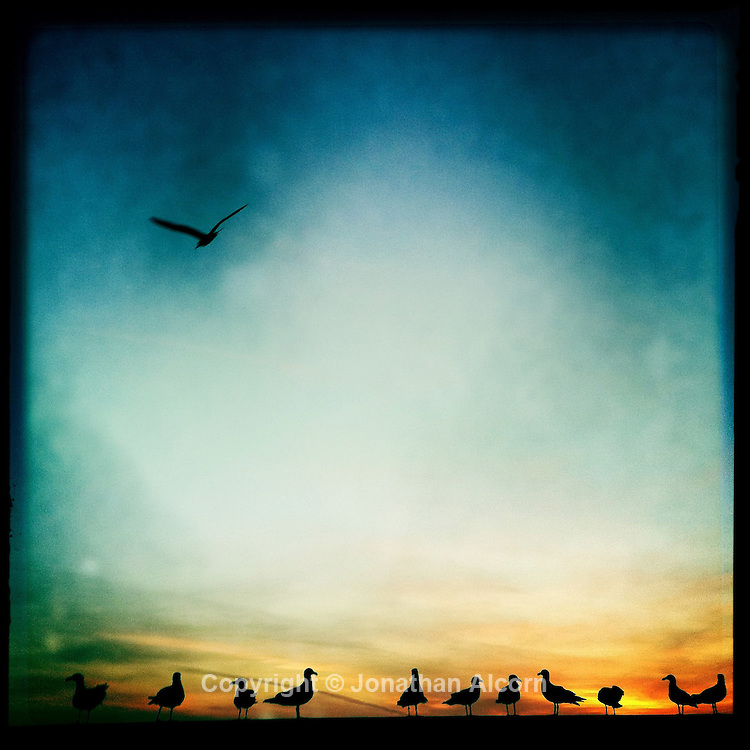 Seagulls on a wall in Venice Beach at Sunset.