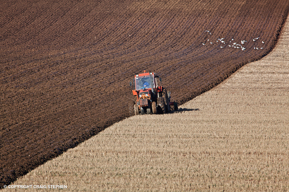 Ploughing a stuble field by the River Tay in Fife, Scotland