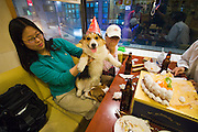 Hongdae. BAU house dog cafe?: pets and owners relaxing and having fun with friends. Birthday party, complete with cake.