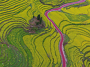 ZUNYI, CHINA - <br /> <br /> Stunning Aerial view shows pink touring road in china<br /> <br /> Aerial view of a purple pink touring road across the blooming rape flowers on the terrace at Hongdu Village in Yuqing County<br /> ©Exclusivepix Media
