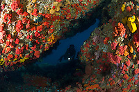 Diver in Reef Cavern covered in Cup corals