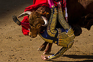 Bullfighter Tomas Angulo is tossed by bull during a bullfight at Las Ventas bullring in Madrid, Spain, Sunday, April 19, 2015.