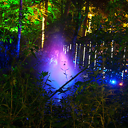 Scottish Autism service users visit the Enchanted Forest  show: Elemental at Faskally Wood, near Pitlochry. 01 Oct 2014. Copyright © photo by Tina Norris 07775 593 830