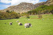 Countryside around Buttermere, Lake District national park, Cumbria, England, UK