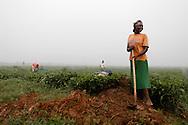 Rwanda.<br /> Des ouvri&egrave;res agricoles entretiennent les foss&eacute;s de drainage d'une plantation  de th&eacute; &agrave; Mulindi, province de Byumba.
