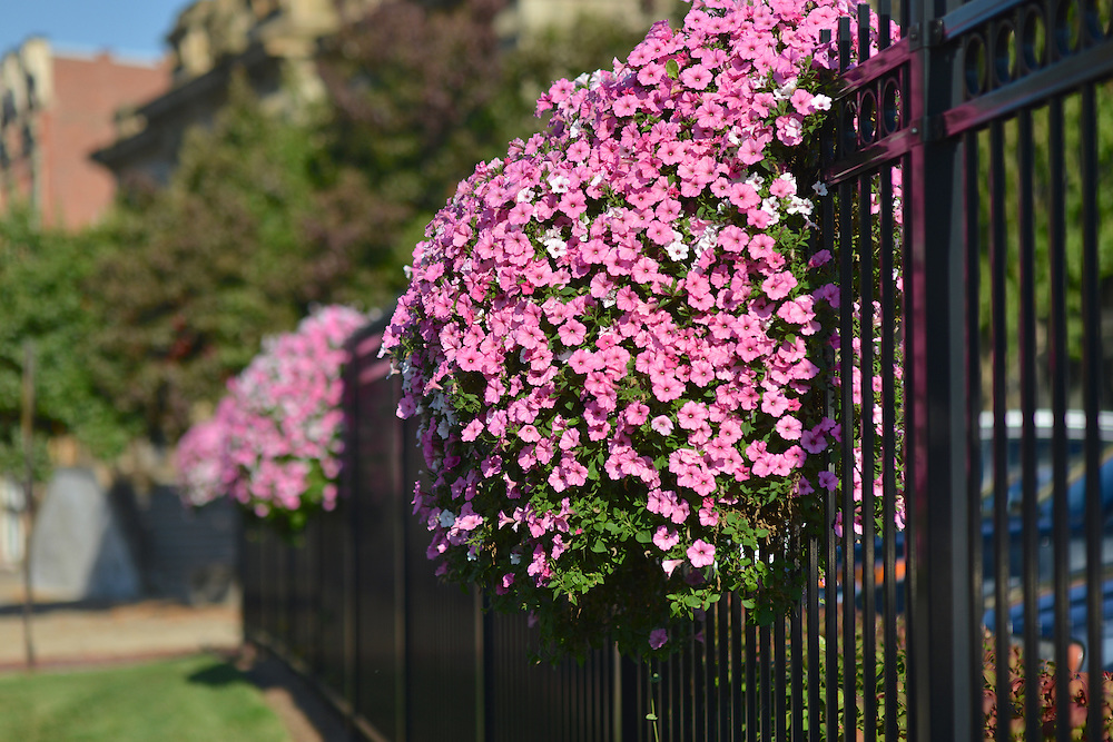 Highland Square Akron >> Hanging flower baskets fence | AkronStock
