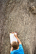 Boy Drawing by Tree