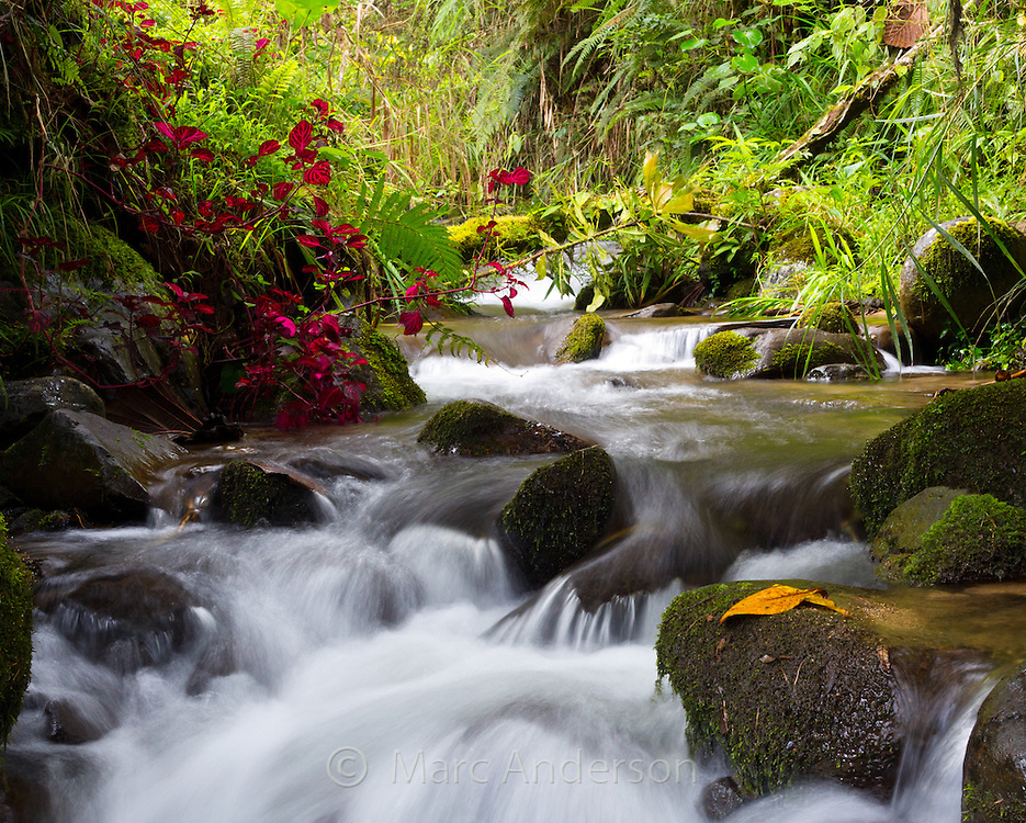 Beautiful flowing stream in temperate rainforest in the Papua New Guinea highlands.