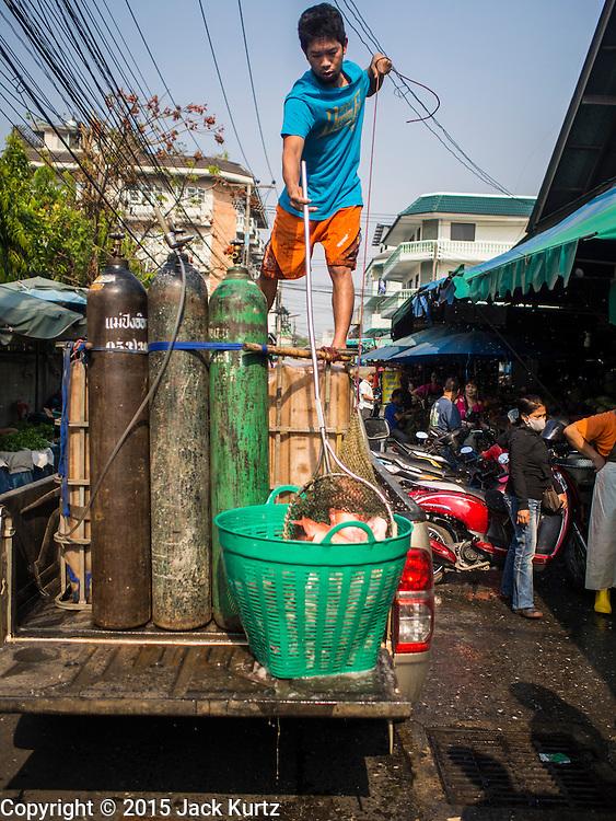 03 APRIL 2015 - CHIANG MAI, CHIANG MAI, THAILAND: A fish farmer delivers farm raised tilapia to a market in Chiang Mai, Thailand.        PHOTO BY JACK KURTZ