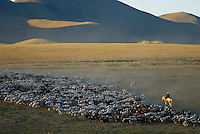 Mongolie. Province d'Ovorkhangai. Nomade et son troupeau.// Mongolia. Ovorkhangai province. Nomad with his drove.