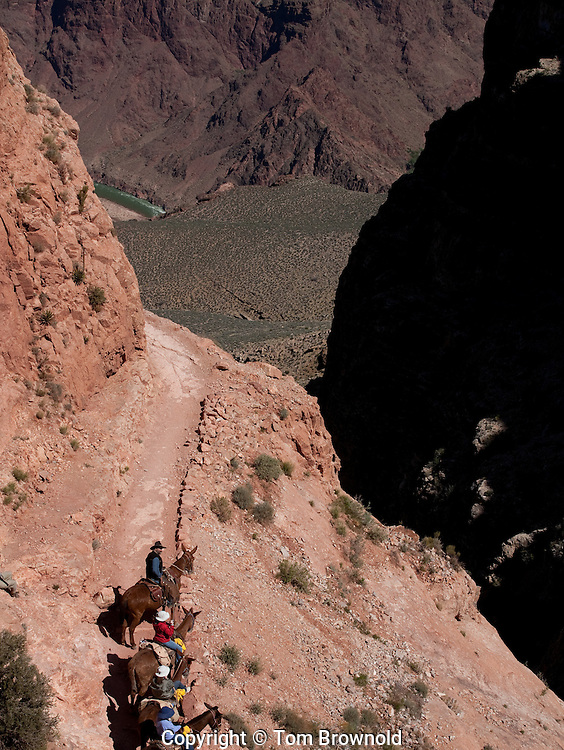 Trail ride resting in the Redwall layer of the Grand Canyon.