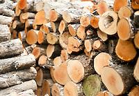 tricky trees coromandel peninsula kuaotunu whitianga matarangi wood photos