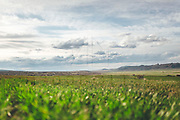 Green spring fields landscape in a cloudy day, Teruel, Spain