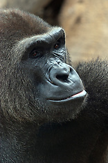 Mammal Royalty Free Stock Images