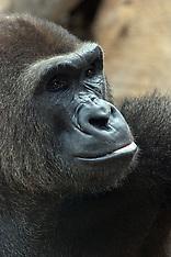 Monkey, ape, chimp, gorilla, etc.