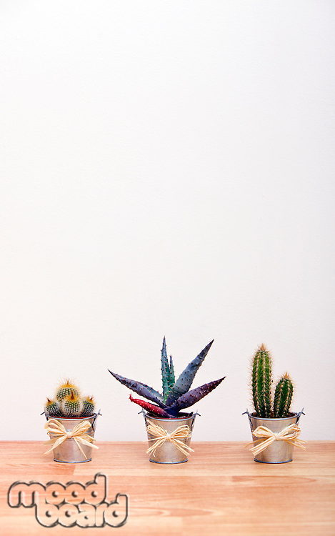 A variety of Cacti in pots