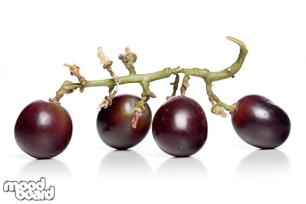 Studio shot of grapes on white background