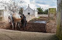 Masseria Minoia sorge a Conversano, in provincia di Bari, all&rsquo;interno del Parco Regionale dei Laghi e della Gravina di Monsignore e a due passi dal Parco Storico di Castiglione.<br /> La struttura, risalente al XVII secolo, possiede tutte le caratteristiche delle costruzioni rurali tipiche del paesaggio pugliese.