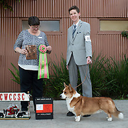 Cardigan Welsh Corgi of SC 2019
