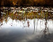 Nature / Landscape / Exteriors