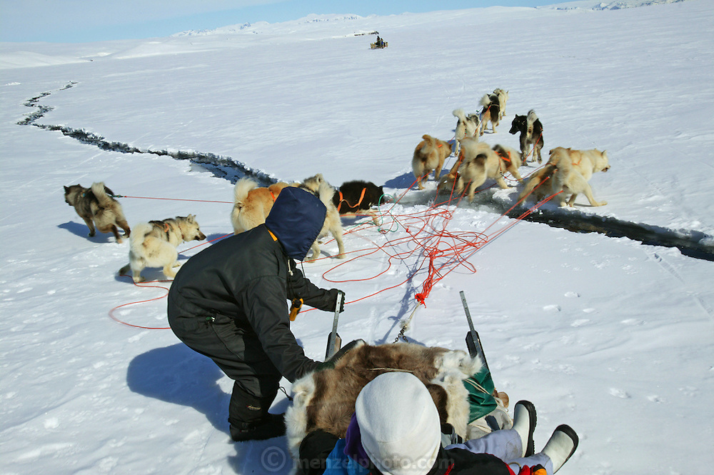 Seal hunter Emil Madsen shouts commands to his dogs as they try to get over a crack in the ice near Cap Hope Village in Greenland.  (Emil Madsen is featured in the book What I Eat: Around the World in 80 Diets.) Getting over these cracks can be very dangerous as there is always the very serious worry of falling in. In the spring this can be dangerous because the ice is breaking up and sometimes huge pieces break off and move out to sea. When the snow crust is hard enough to ensure that the dogs won't break through, they can pull the half-ton weight of the sled for hours on end. On level ground, the animals pull at about the pace of a running human, but the sleds can whip down hills so fast that drivers must step on the brake at the rear of the sled to avoid running over their dogs.  MODEL RELEASED.