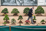 Bonzai trees are watered in the heat. The Chelsea Flower Show 2014. The Royal Hospital, Chelsea, London, UK. 19 May 2014.