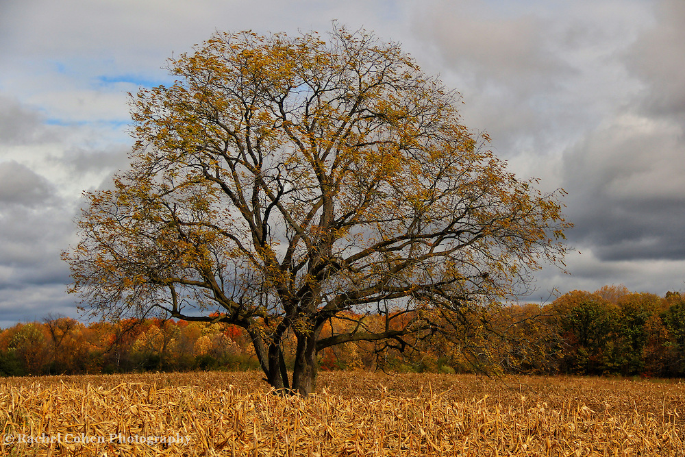 &quot;Loner&quot;<br />