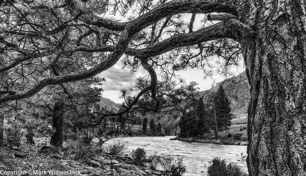 Middle Fork of the Salmon River at the Camas Creek confluence.