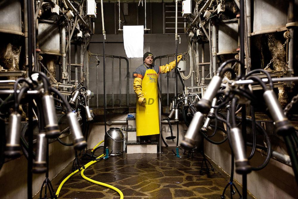 Azienda agricola Fratelli Boldini, a poco meno di un chilometro dal Ticino. Le oltre cento vacche sono munte due volte ogni giorno, tutti i giorni, sabato e domenica compresi. Tra le 4-5 e 6-7 del mattino e tra le 16-17 e le 18-19. Mauro Boldini attende la fine del turno di mungitura delle vacche.