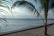 Palm trees on Beach, Ambergris Caye, Belize