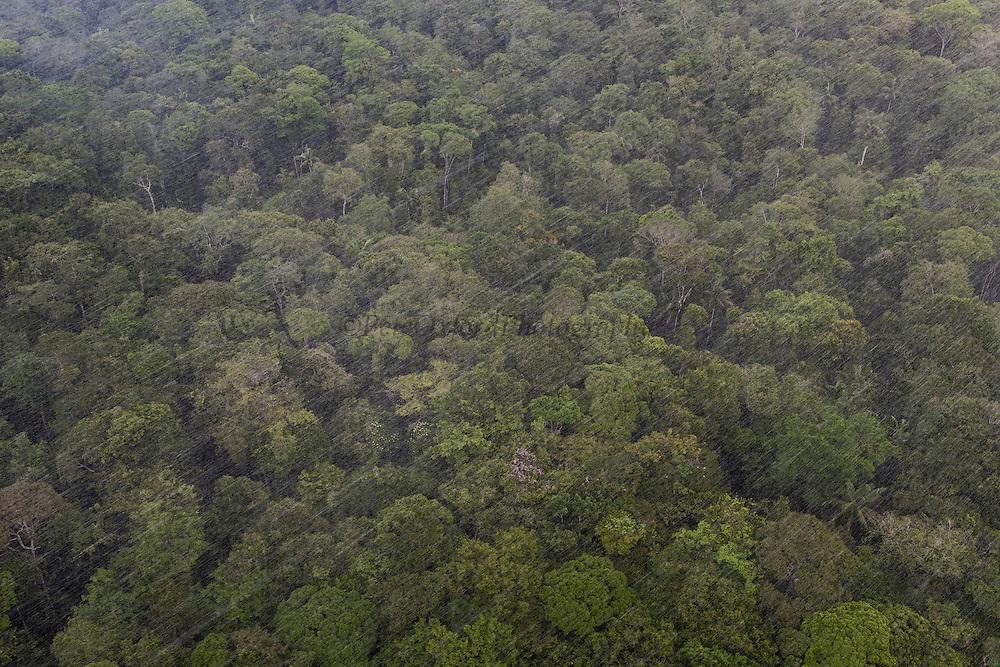 Rainforest Canopy<br /> GUYANA<br /> South America