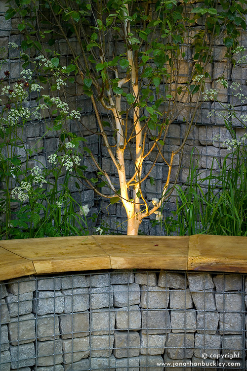 Stone filled gabions used to make seat and walls. Lighting illuminating silver birch. Urban Glade Garden. Designer: Paula Ryan - Chelsea 2005
