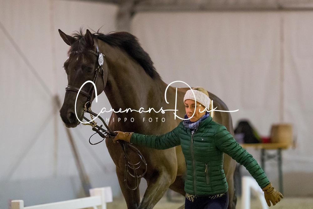 Caetano Maria, POR, Hit Plus<br /> Jumping Mechelen 2019<br /> © Hippo Foto - Sharon Vandeput<br /> 27/12/19