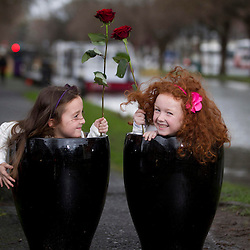 Epilepsy Ireland Rose Day