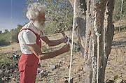 Castelbuono, Giulio Gelardi, the oldest and one of the last producers of manna in the world..<br /> Castelbuono, Giulio Gelardi, il pi&ugrave; anziano e tra gli ultimi produttori di manna nel mondo.
