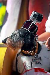 08 Feb 2015. New Orleans, Louisiana.<br /> Mardi Gras. King of the parade, King Andouille. The Mystic Krewe of Barkus takes to the streets of the French Quarter with the theme 'Bark Wars: Return of the K-9.' Barkus is the only officially licensed Mardi Gras krewe by and for canines. <br /> Photo; Charlie Varley/varleypix.com