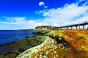 wide angle view of Bare Island, La Perouse with brilliant blue skies and details of shell encrusted rocks in the foregound