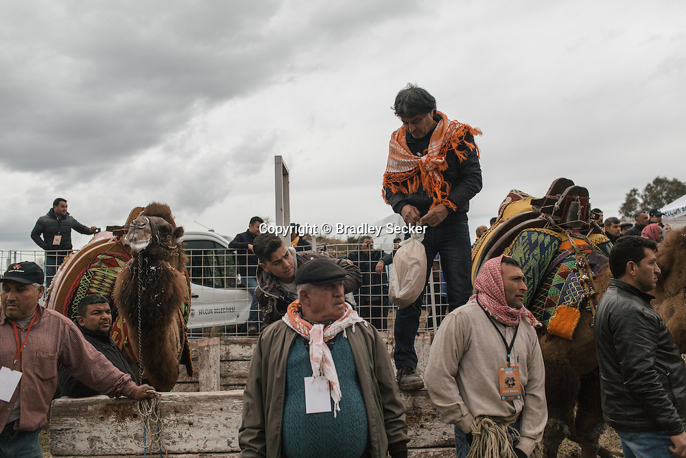 TURKEY, Izmir, Selçuk. Camel owners and trainers watch the 35th annual Selcuk Camel Wrestling Festival competition near Izmir, Turkey. The event usually draws large crowds of upto 20 thousand, although this year the numbers were lower due to recent security concerns and the threat of rain.
